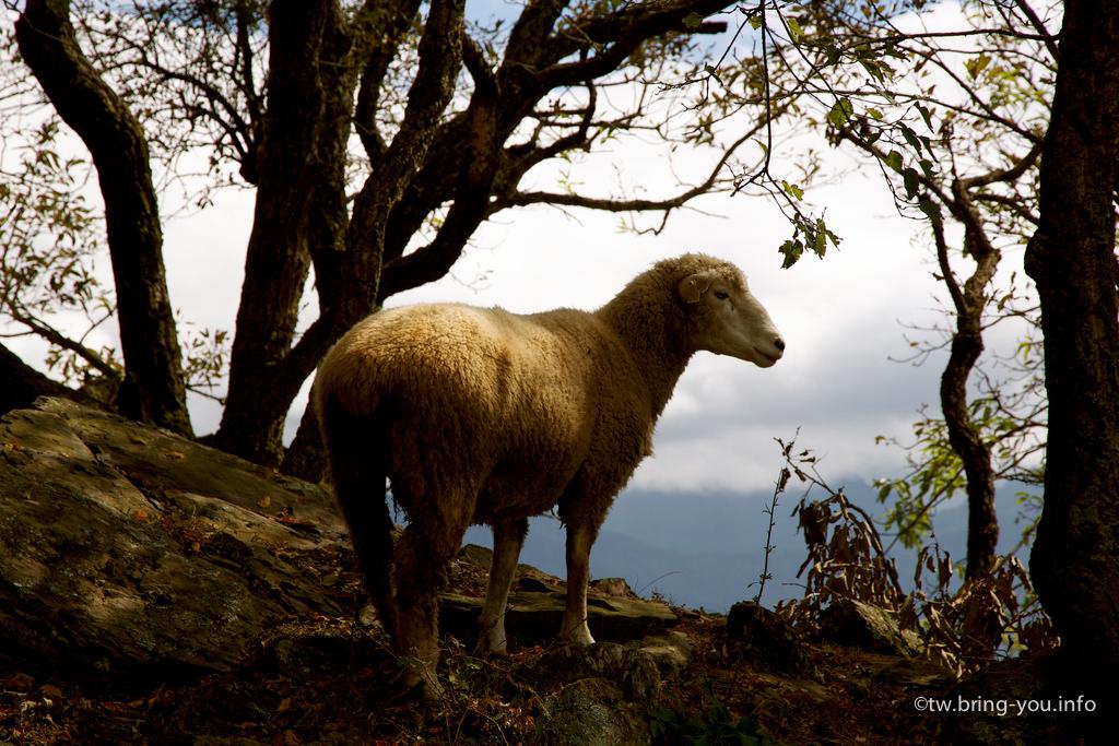 羊骨最初的狀態