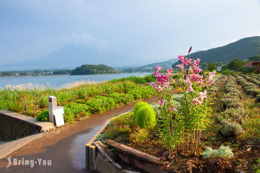 【富士山河口湖景點】河口湖北岸「大石公園」,騎腳踏車來看薰衣草