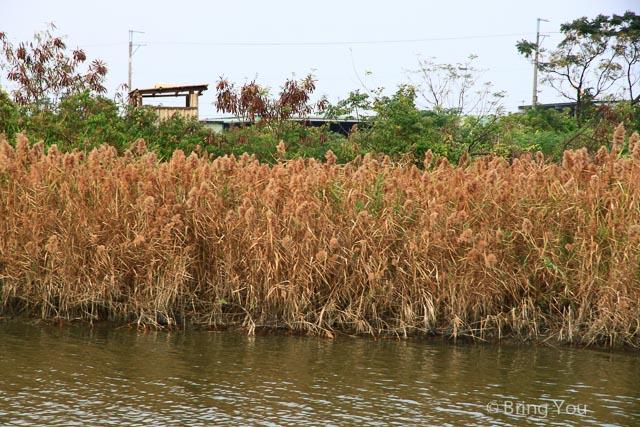 高雄旅遊景點 茄萣 濕地-34