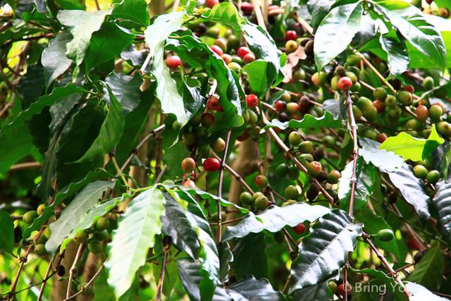 大樹美食 紅豆咖啡-19