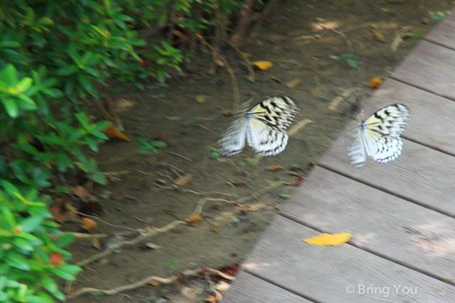 金獅湖 蝴蝶園-11