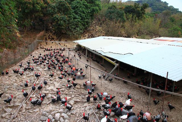 台南旅遊 草山月世界 土雞