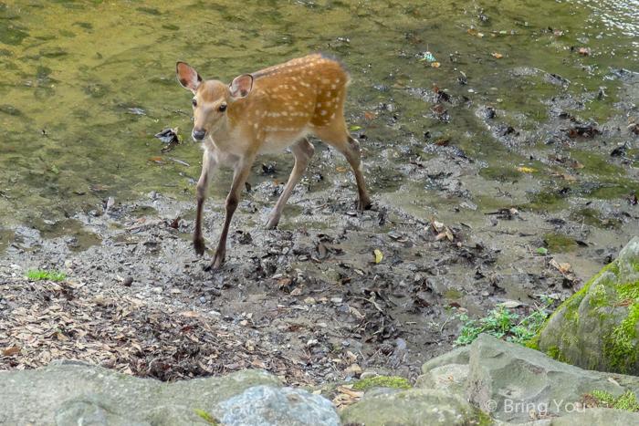奈良小鹿斑比-3