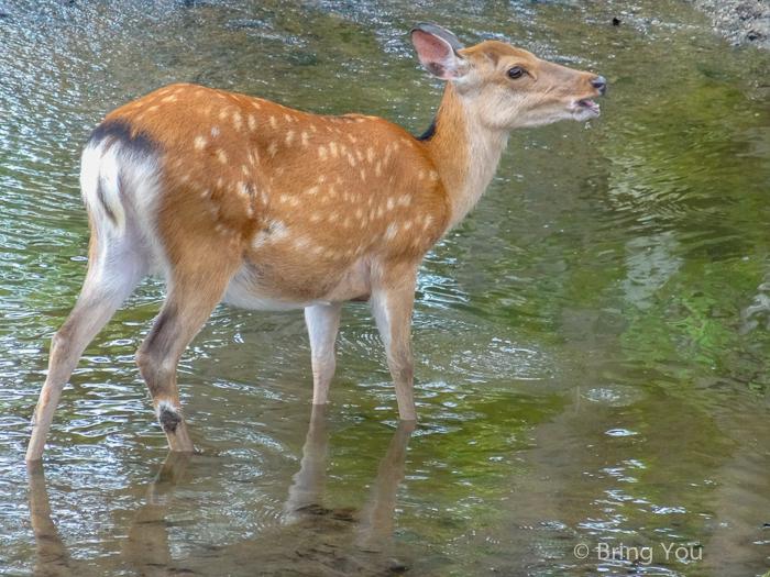 奈良小鹿斑比-4