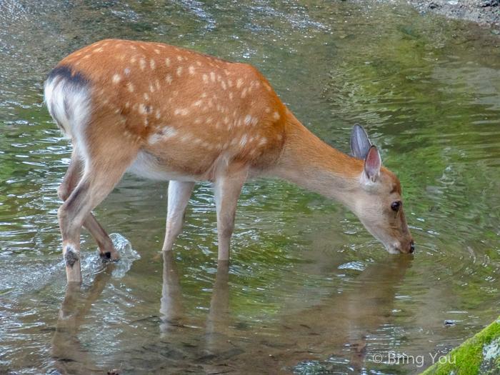 奈良小鹿斑比-5