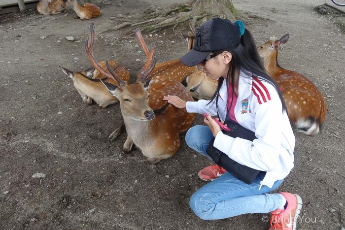 奈良小鹿斑比-6