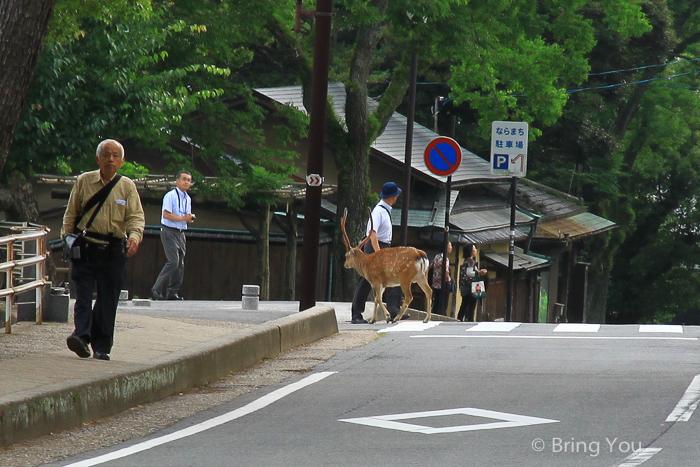 奈良小鹿斑比a-3