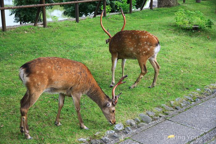 奈良小鹿斑比a-8