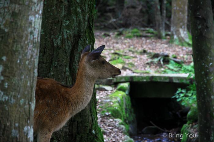 奈良鹿-84