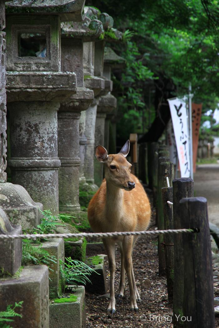 奈良鹿-86