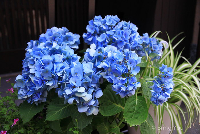 花見小路-15