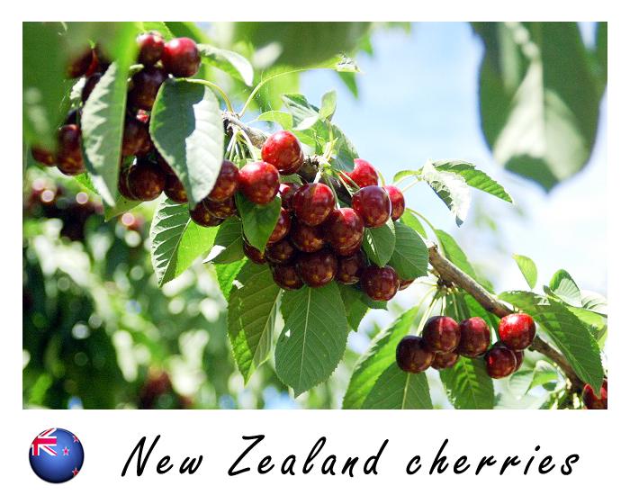 紐西蘭櫻桃