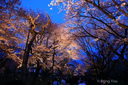 【行程規劃參考】如何用京都、大阪觀光一日券暢玩京都、大阪、宇治