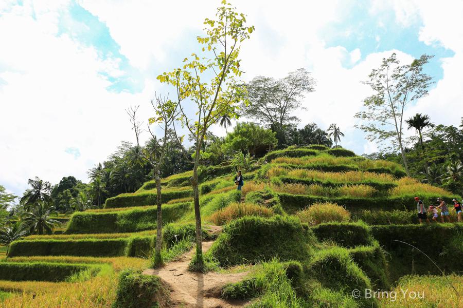 tegallalang-terrace-10