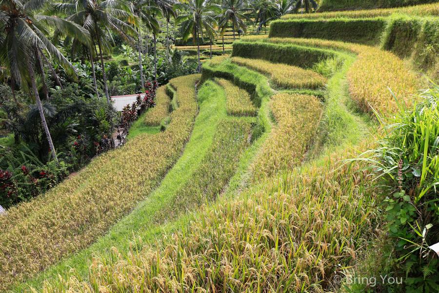 tegallalang-terrace-11