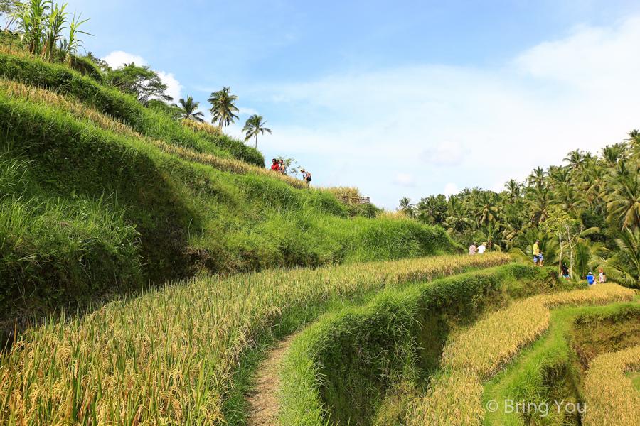 tegallalang-terrace-12