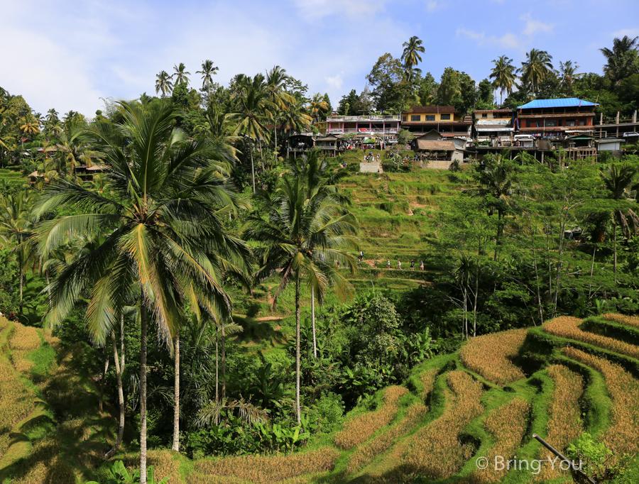 tegallalang-terrace-14