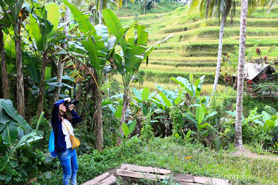 tegallalang-terrace-3