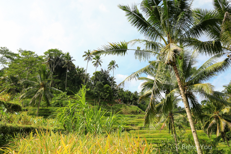 tegallalang-terrace-6