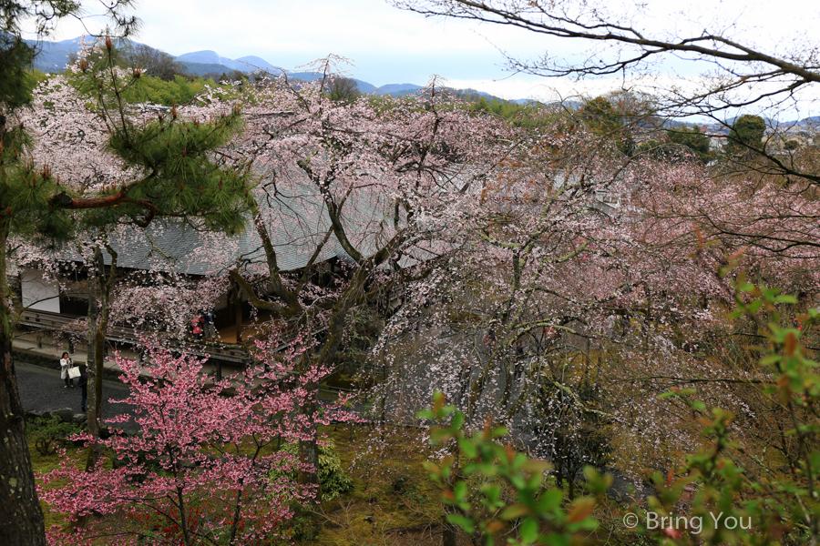 arashiyama-travel-sakura-2