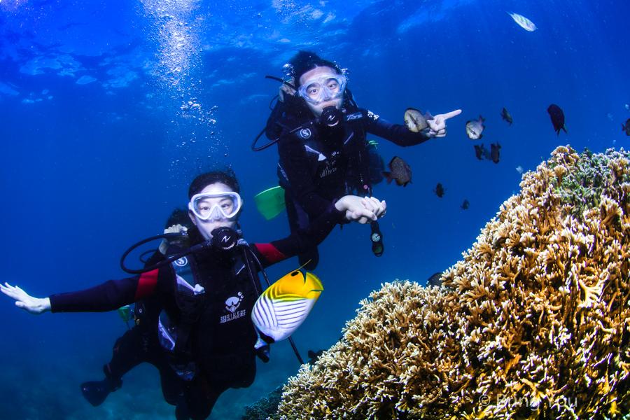 dive-in-kenting-28