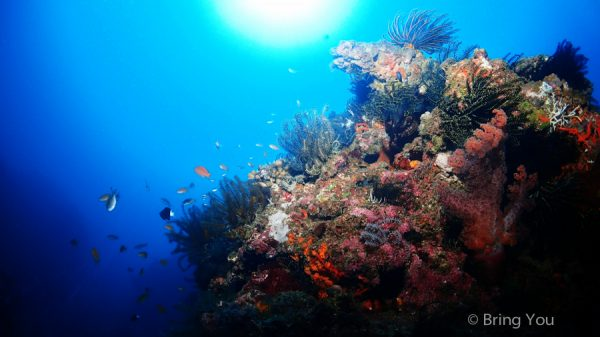 【墾丁好玩潛水體驗】被魚群包圍的海中美景,潛莊後壁湖岸潛&專業攝影