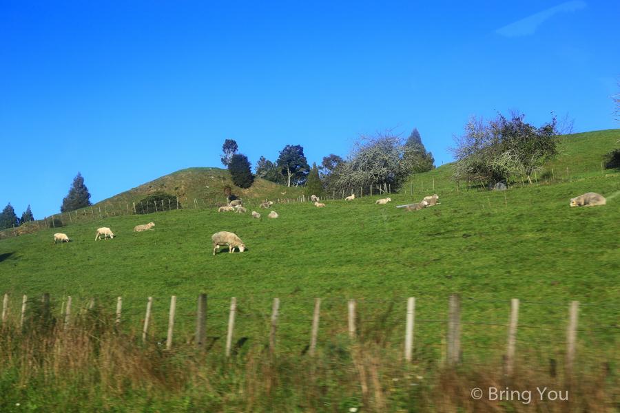 newzealand-headfirst-5