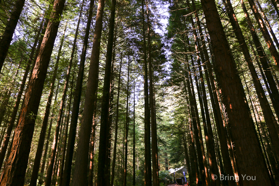 rotorua-redwood-14