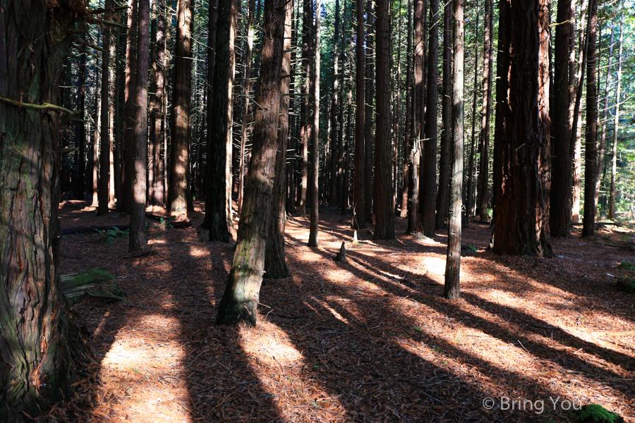 rotorua-redwood-15