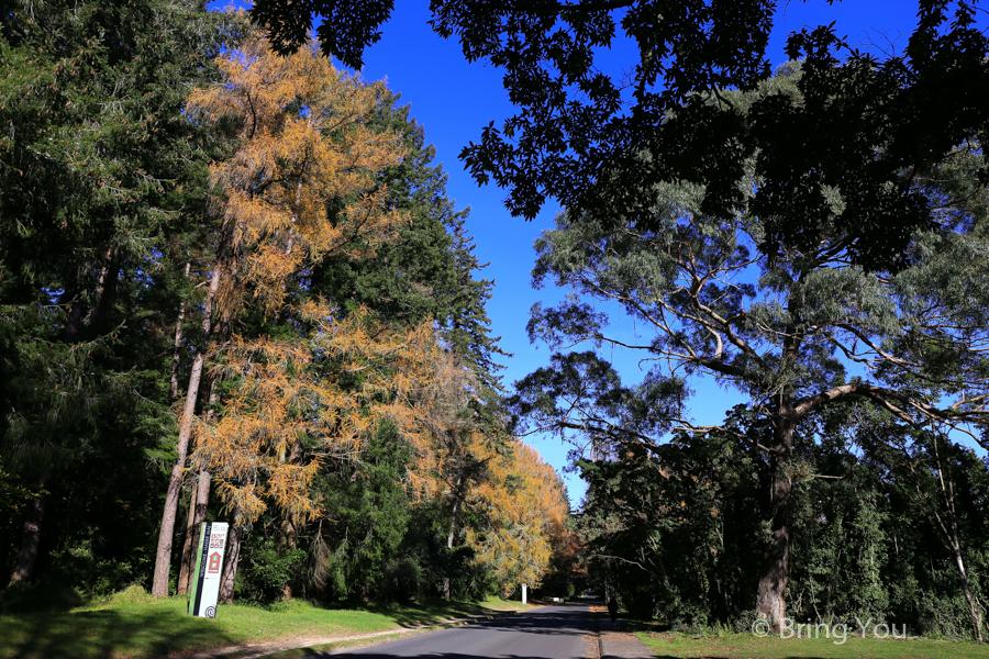 rotorua-redwood-3