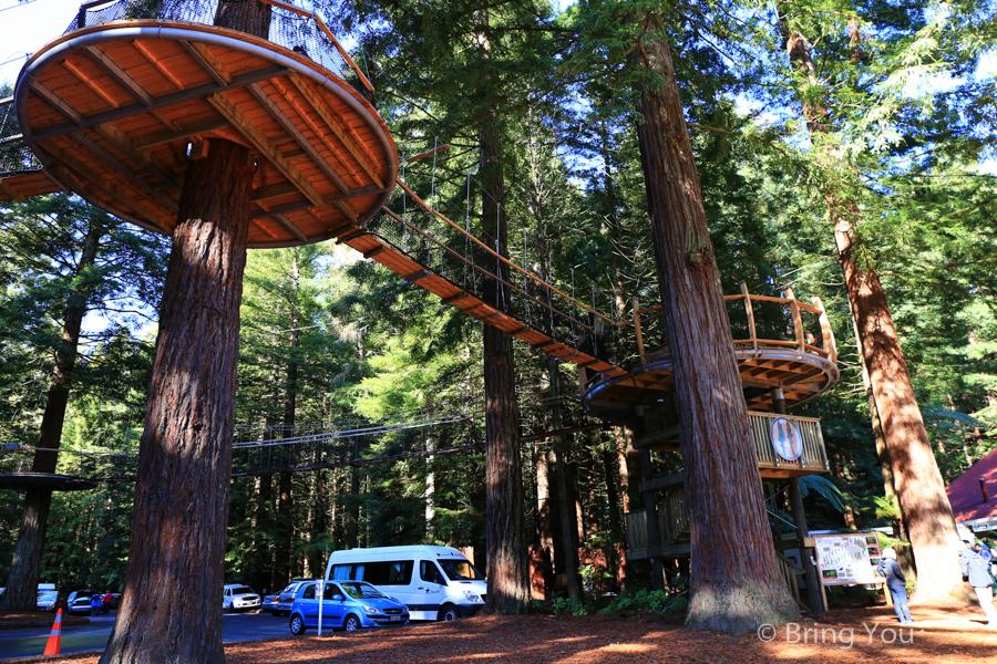 rotorua-redwood-9