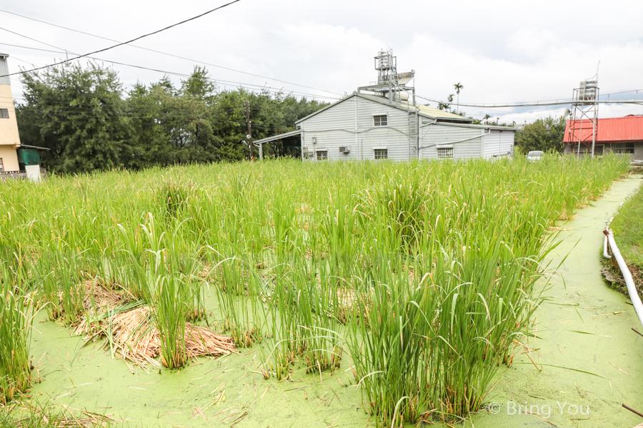nantou-farm