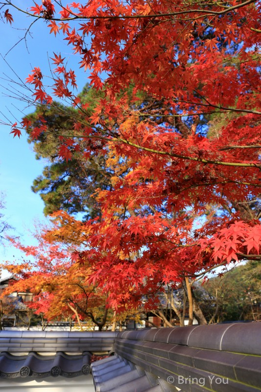kyoto_maple_leaf-3