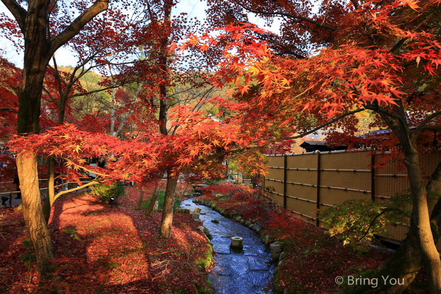 kyoto_maple_leaf-6