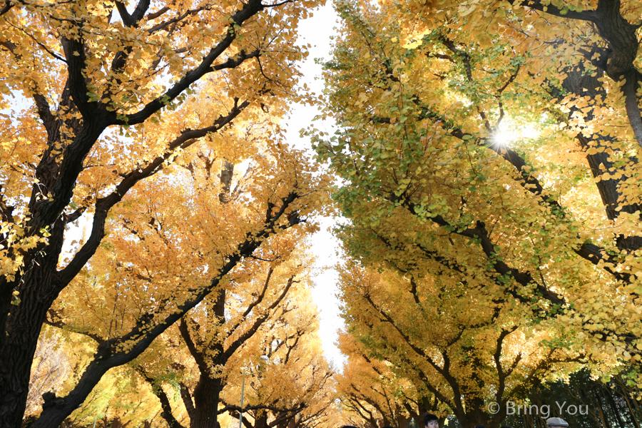 maple_leaf-4