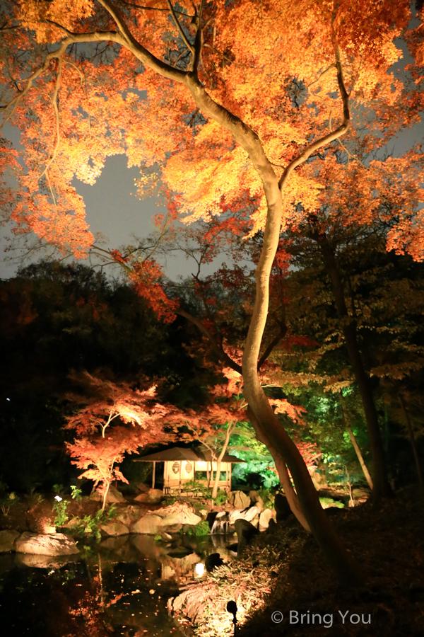tokyo_garden_maple_leaf-5