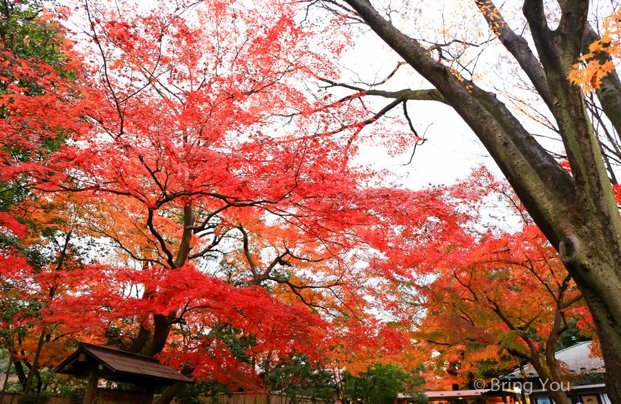 tokyo_garden_maple_leaf