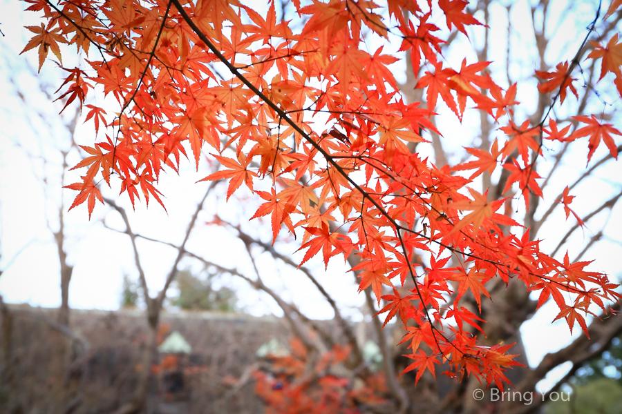 tokyo_park_maple_leaf-2