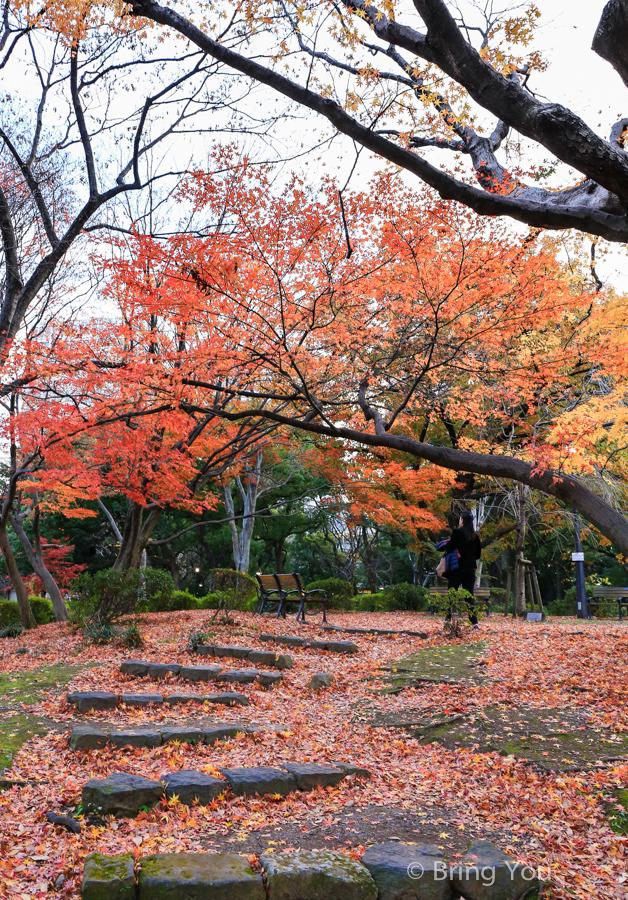 tokyo_park_maple_leaf-4