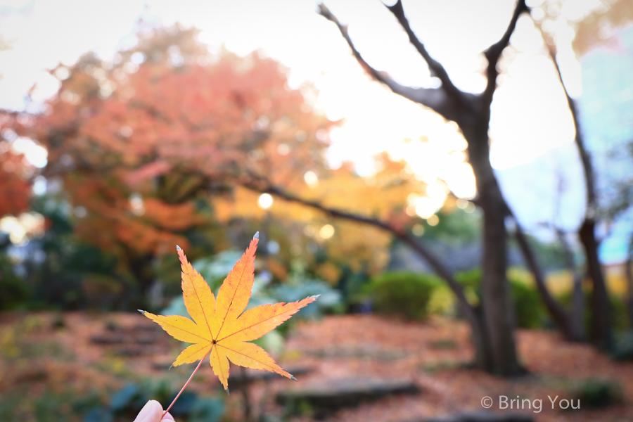 tokyo_park_maple_leaf