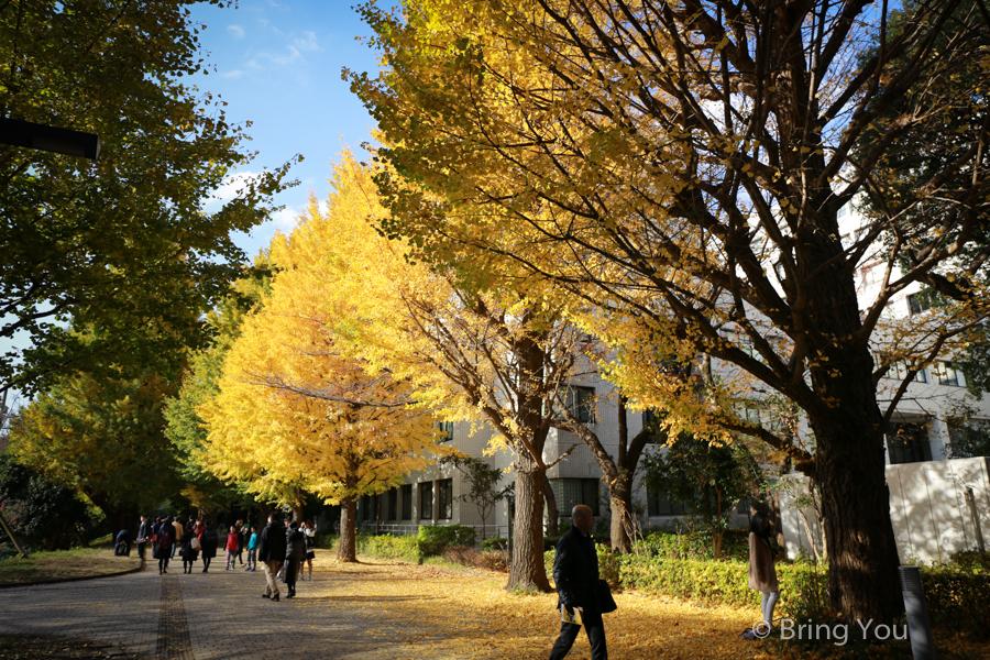 tokyo_university_gingko-2