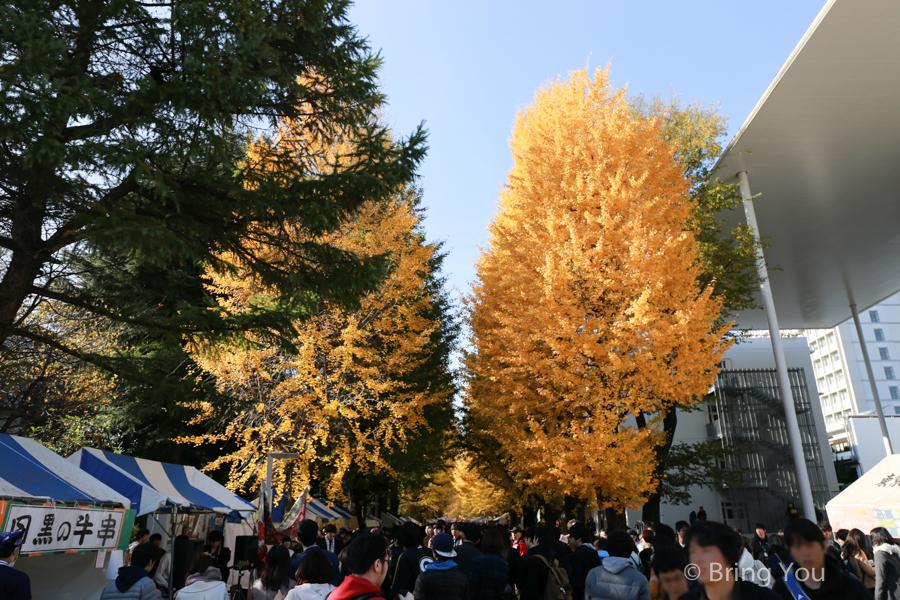 tokyo_university_gingko
