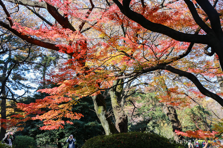 Shinjuku-Gyoen-National-Garden_-13