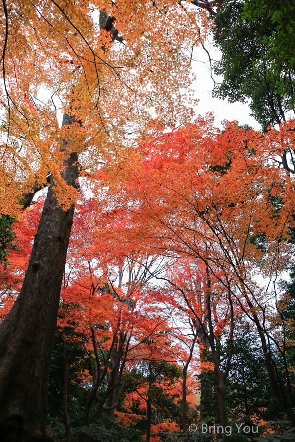 koishikawa-garden-14
