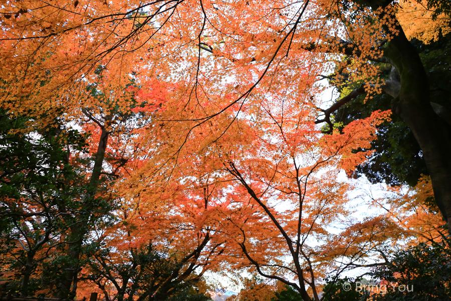 koishikawa-garden-4
