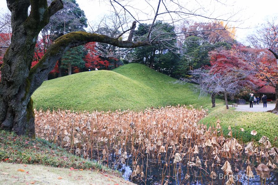 koishikawa-garden-8