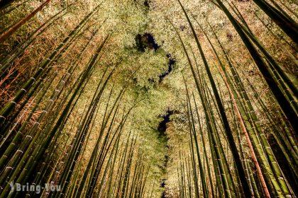 嵐山竹林夜景