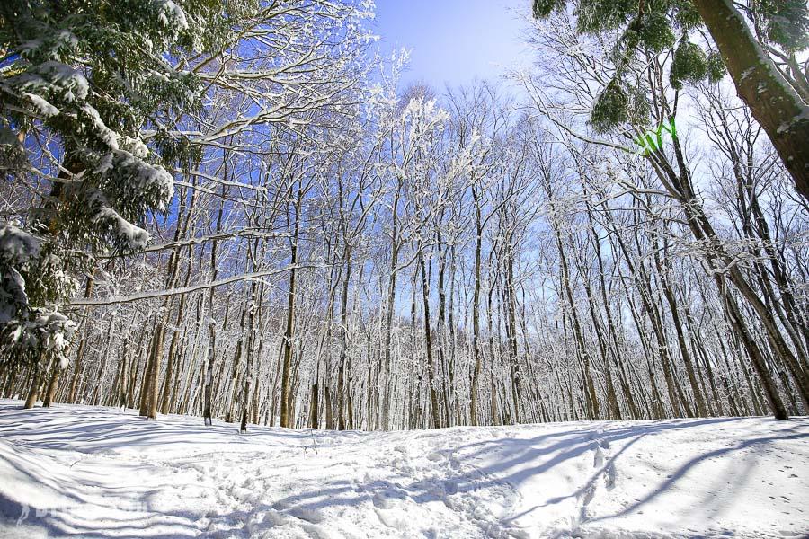 【日本秘境|新潟景點】雪國夢幻森林美景,十日町市松之山「美人林」