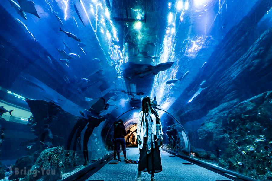 【杜拜逛街景點】杜拜購物中心(Dubai Mall):杜拜水族館&美食餐廳推薦&音樂噴泉