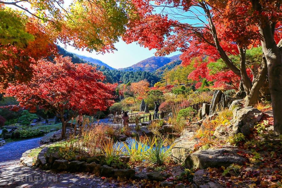 【韓國京畿道】晨靜樹木園,秋天楓葉如夢似幻的韓劇景點
